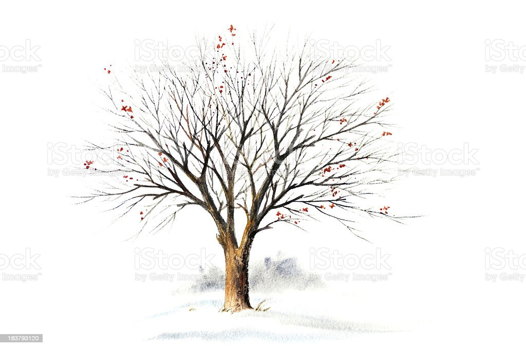 Winter Tree Without Leaves vector art illustration