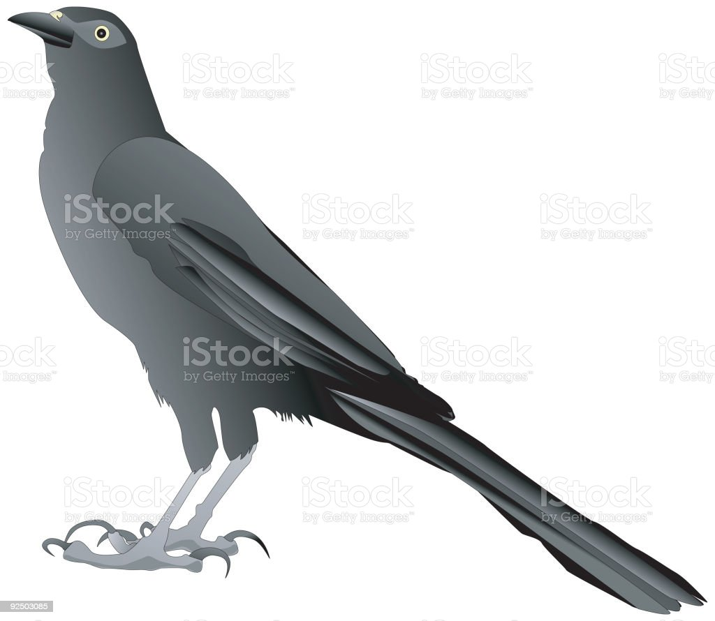 Wise Crow royalty-free wise crow stock vector art & more images of animal wing