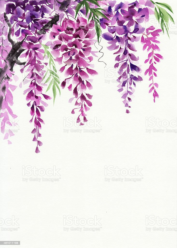 Wisteria Blossom Stock Illustration Download Image Now