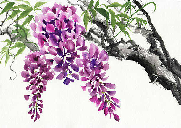 Top 60 Wisteria Clip Art, Vector Graphics and ...