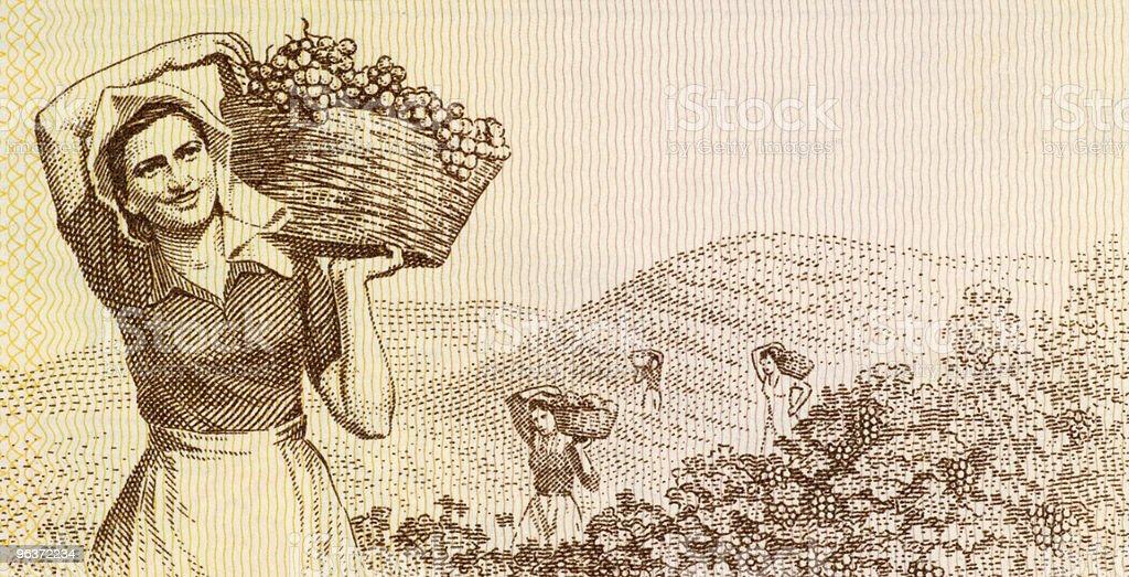 Woman harvesting grapes vector art illustration