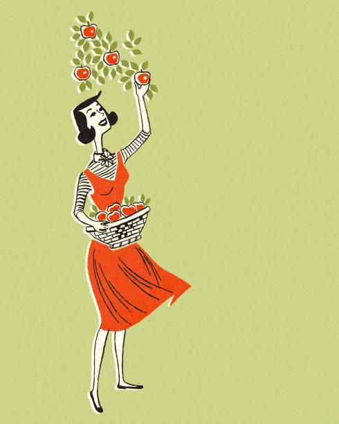 ilustrações de stock, clip art, desenhos animados e ícones de woman picking apples - picking fruit