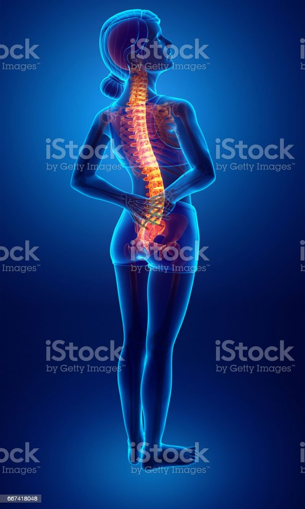 Women Feeling the Back pain vector art illustration