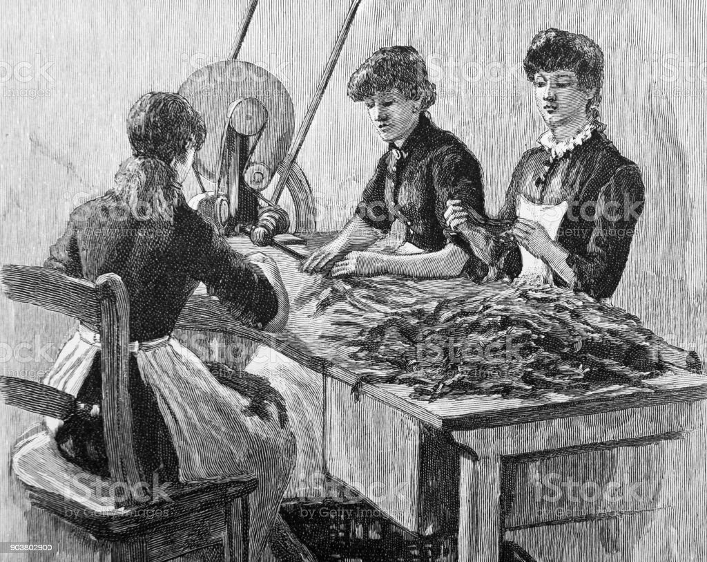 Women sorting leaves inside a tobacco factory in 19th Century vector art illustration