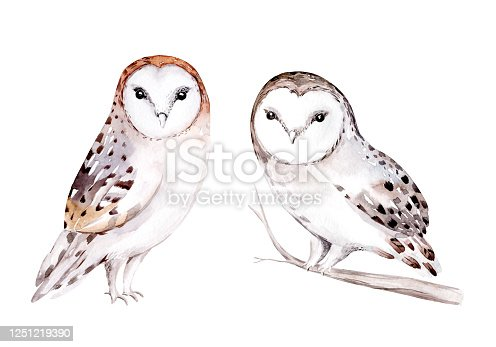 istock Woodland watercolor cute animals baby owl. Scandinavian owls on forest nursery poster design. Isolated charecter 1251219390