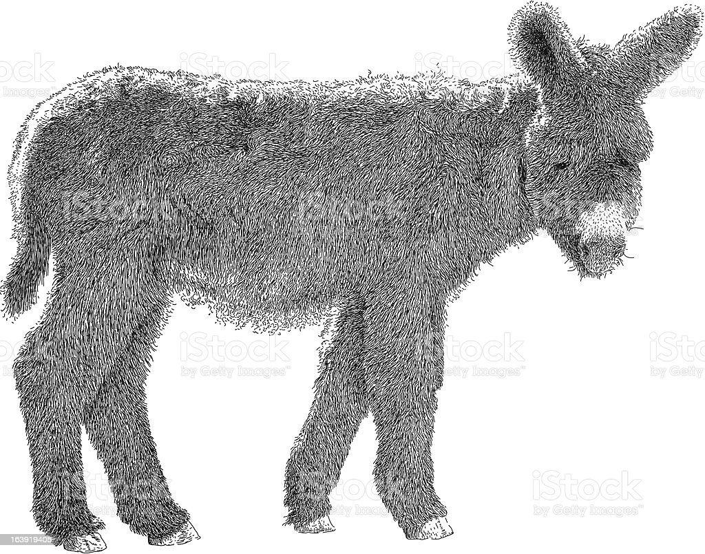 Woolly Ass royalty-free woolly ass stock vector art & more images of animal