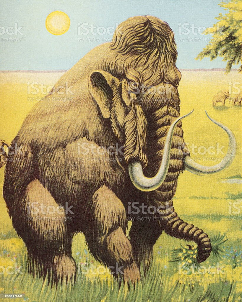 Woolly Mammoth royalty-free woolly mammoth stock vector art & more images of animal