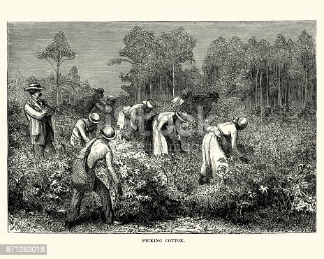 Vintage engraving of Workers picking cotton, Louisiana, 19th Century