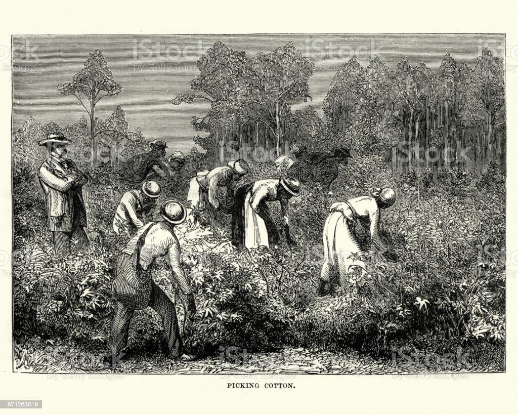 Workers picking cotton, Louisiana, 19th Century vector art illustration