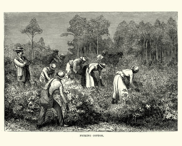 workers picking cotton, louisiana, 19th century - cotton stock illustrations, clip art, cartoons, & icons
