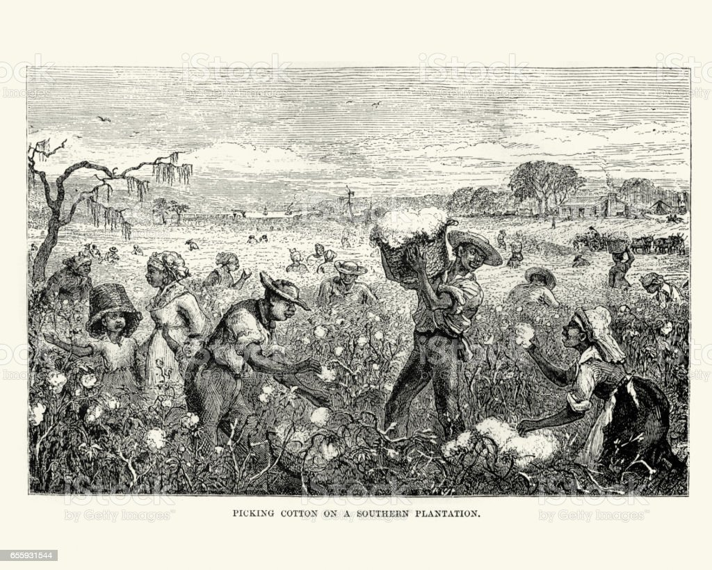 Workers picking cotton on a southern plantation vector art illustration