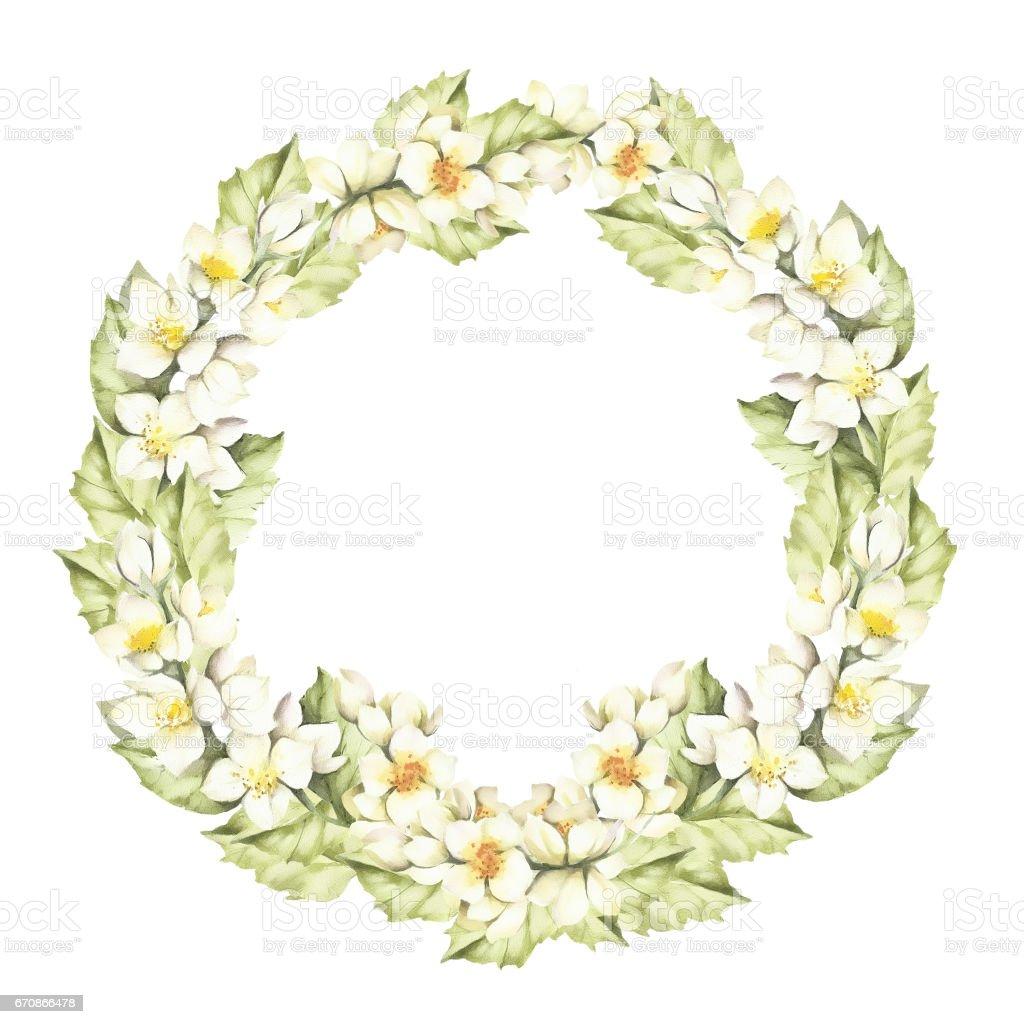 A wreath of jasmine flowers watercolor illustration stock vector art a wreath of jasmine flowers watercolor illustration royalty free a wreath of jasmine izmirmasajfo