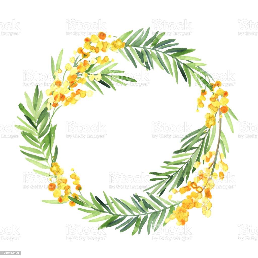 水彩の黄色いミモザの花の花輪は白い背景の上分離します結婚式状の花