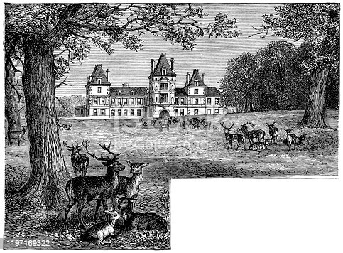 Wynnstay at the town of Ruabon in Wrexham, Wales, Uk. Vintage etching circa 19th century.
