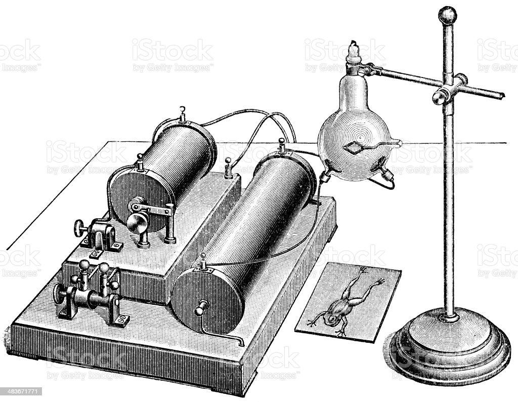x-ray vector art illustration