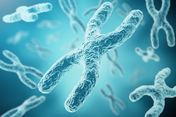 XY-chromosomes as a concept for human biology medical symbol XY-chromosomes as a concept for human biology medical symbol gene therapy or microbiology genetics research, 3d rendering chromosome stock illustrations