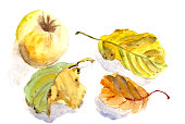 istock yellow apple and autumn apple leaves on a white background, watercolor pattern, botanical sketch 1329779635