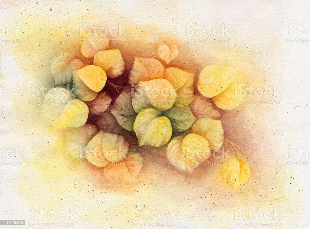 Yellow Aspen vector art illustration