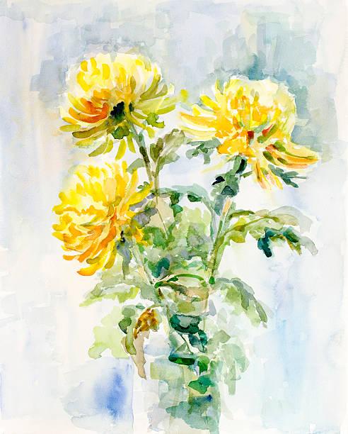 Amarillo chrysanthemums-watercolor - ilustración de arte vectorial
