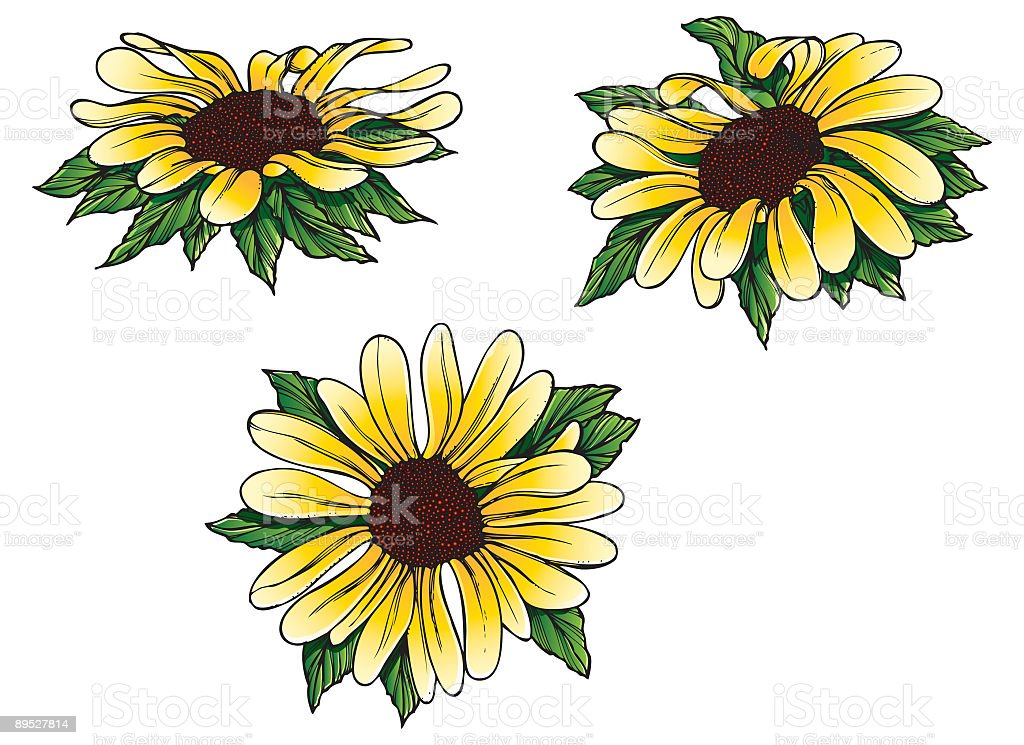 Yellow Daisies royalty-free yellow daisies stock vector art & more images of color image