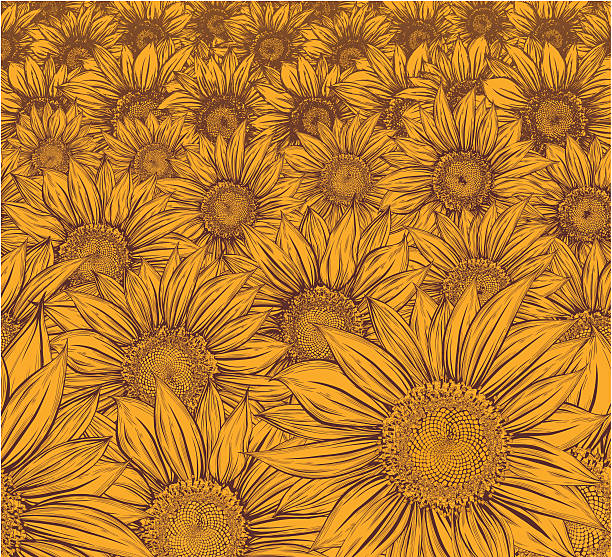 Yellow Field. Sunflower vector art illustration