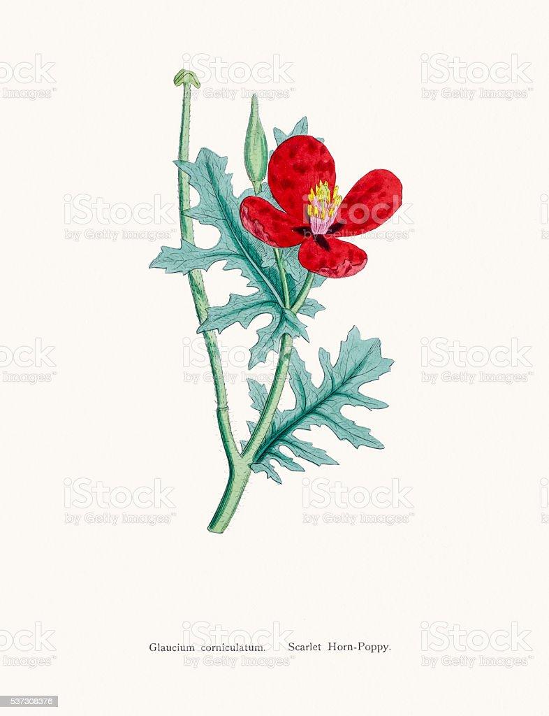 Ilustracion De Trompeta Amarilla Flor Amapola De La Planta Y Mas