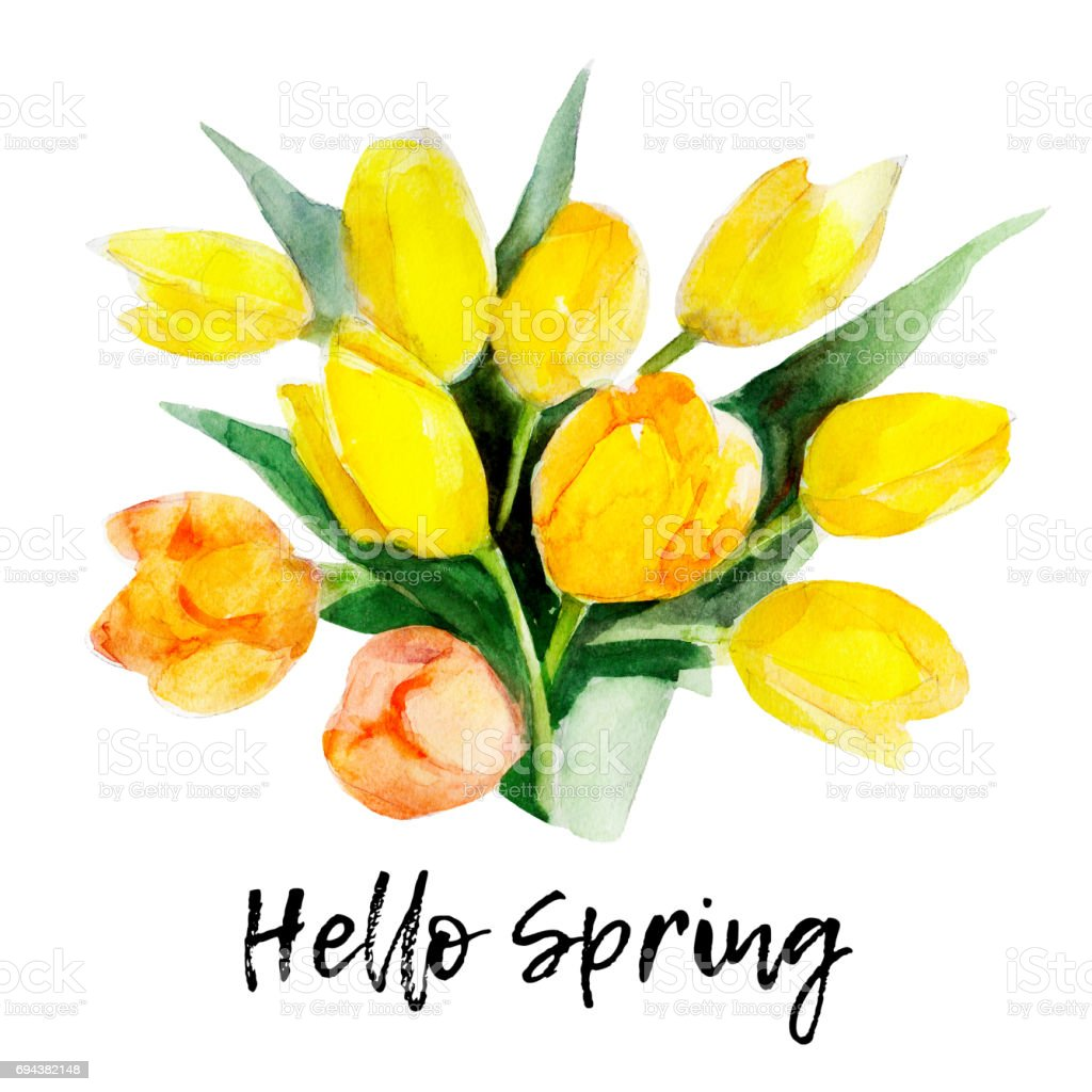 Yellow Tulip Flower Isolated On White Background With Lettering