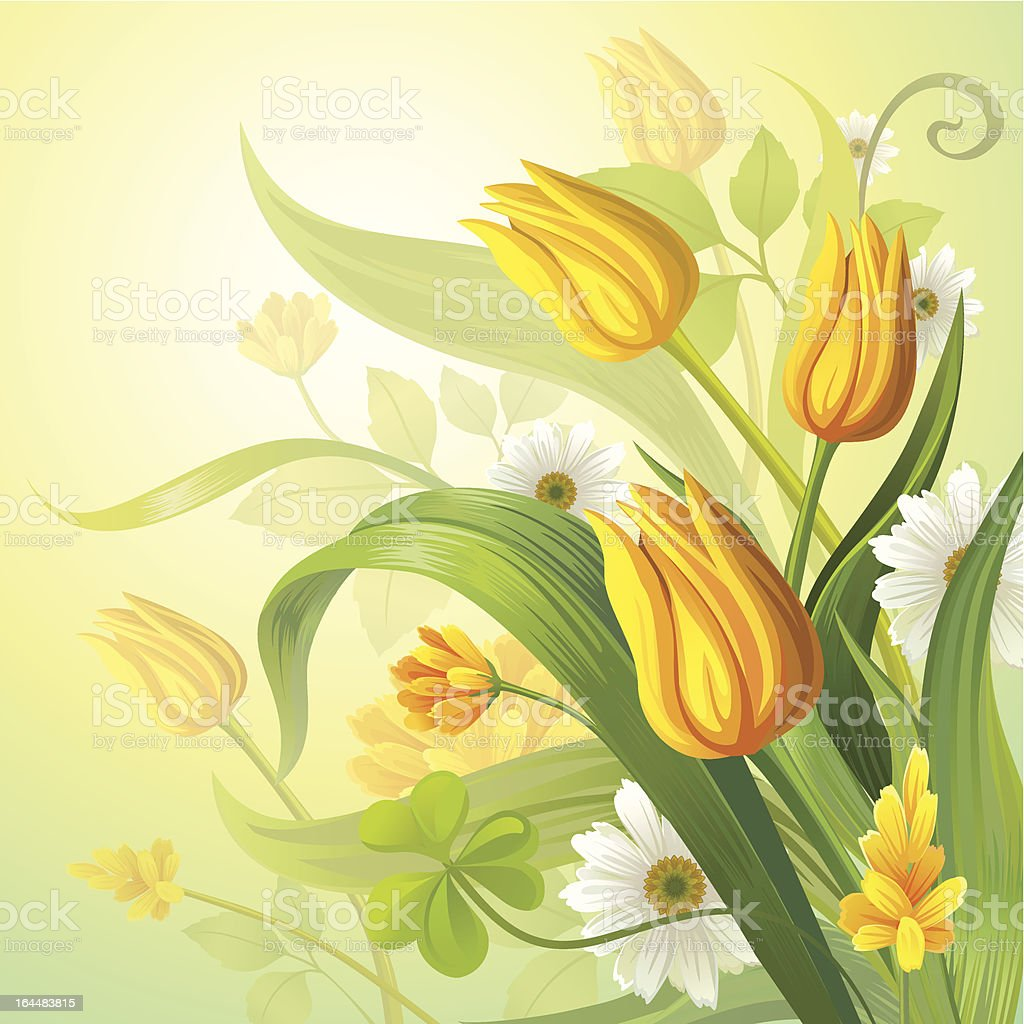 yellow tulips royalty-free yellow tulips stock vector art & more images of beauty