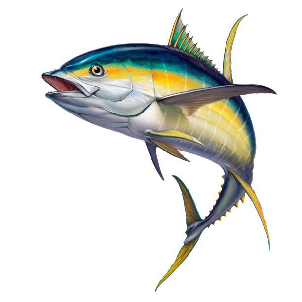 Yellow tuna. black fin yellow tuna on white. Yellow tuna. black fin yellow tuna on white. Realistic isolated illustration. animal fin stock illustrations