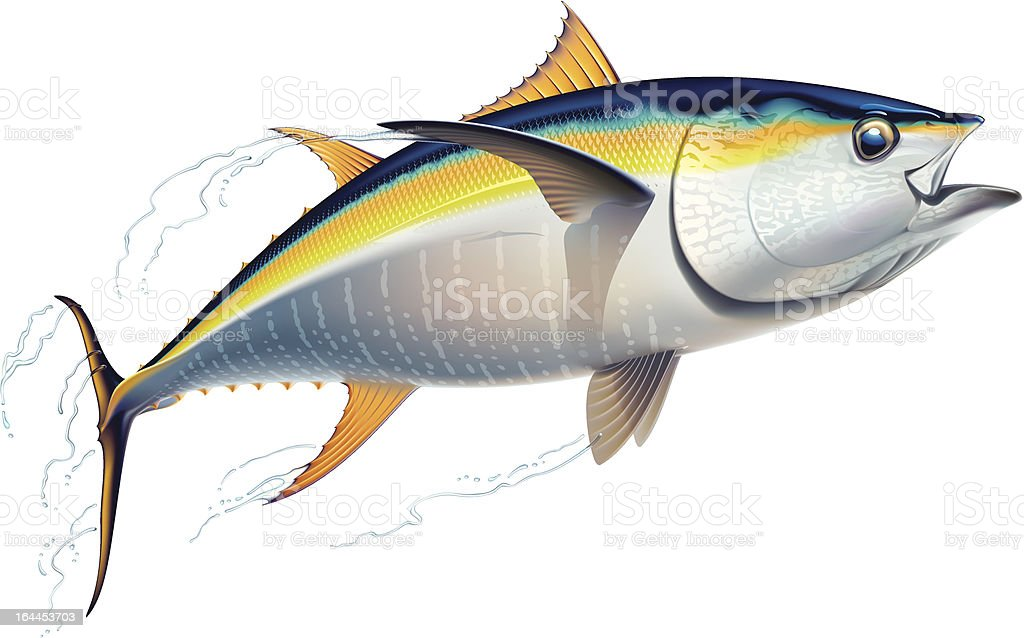 royalty free sea bream clip art vector images illustrations istock rh istockphoto com Species of Bream Fish Types of Bream Fish