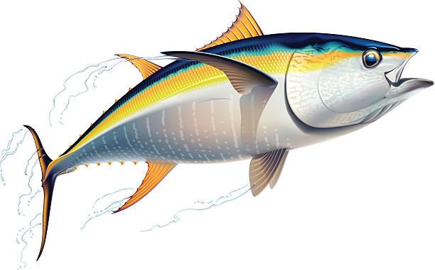 ilustraciones, imágenes clip art, dibujos animados e iconos de stock de atún de aleta amarilla - atún pescado