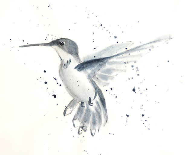 Young Hummingbird Hovering vector art illustration