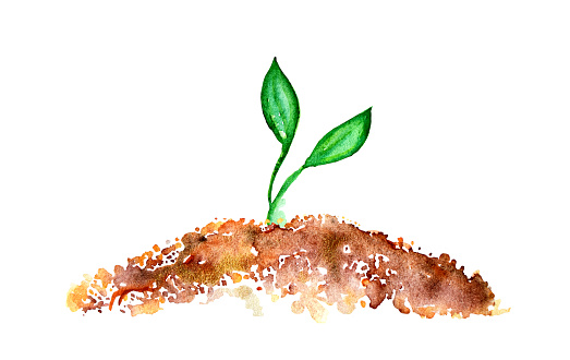 Young sprout watercolor illustration vegetal concept