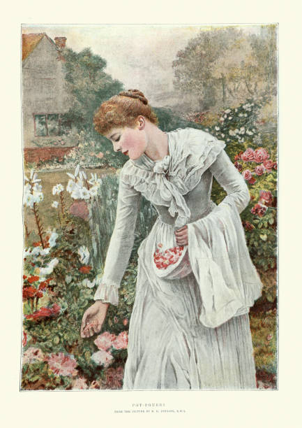 Young woman harvesting rose petals to make Potpourri, Victorian art vector art illustration