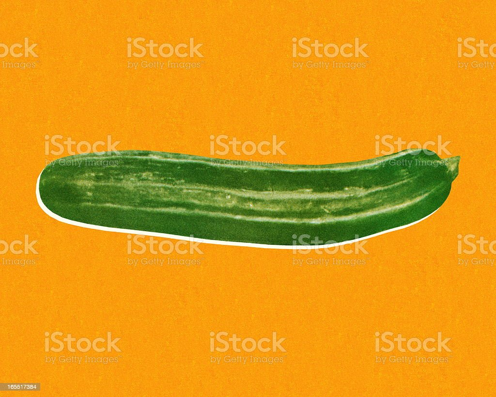 Zucchini vector art illustration