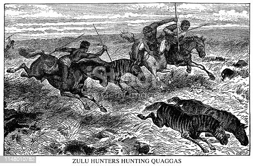 Zulu Hunters Hunting Quaggas - Scanned 1890 Engraving