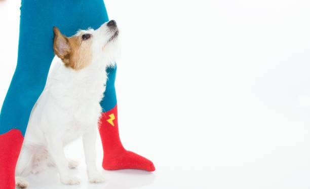 portraot eines hundes blickte zu kleinen besitzer der held strumpfhosen tragen. gegen den weißen hintergrund isoliert - hunde strumpfhosen stock-fotos und bilder