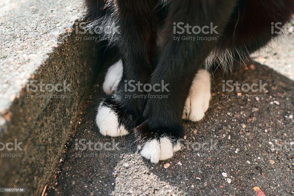 Лапки уличного кота крупным планом stock photo