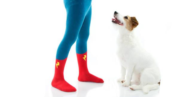 kleines kind tragen held socken oder strumpfhosen trainning seinen hund im gehorsam. auf weißen hintergrund isoliert. - hunde strumpfhosen stock-fotos und bilder