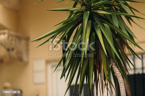 909846922 istock photo CLOSE-UP OF PALM LEAVES 1069729876