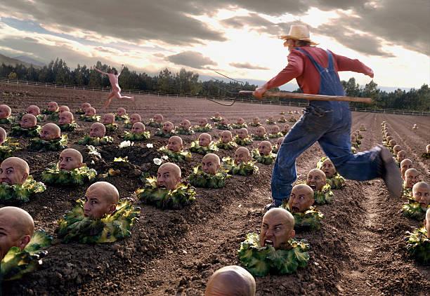 lettucehead - alles hinter sich lassen stock-fotos und bilder