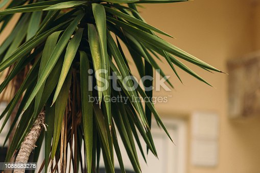 909846922 istock photo CLOSE-UP OF PALM LEAVES 1088683278