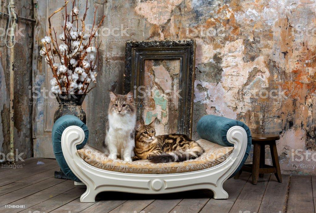Два красивых кота на диване stock photo
