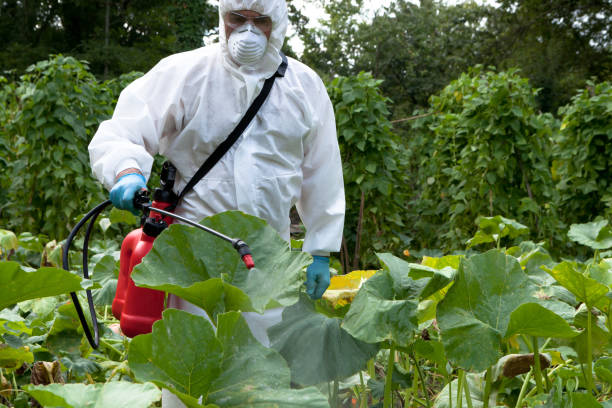 SPRAYING Man spraying pesticide in field of pumpkins herbicide stock pictures, royalty-free photos & images