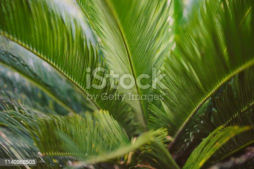 909846922 istock photo CLOSE-UP OF PALM LEAVES 1140986503