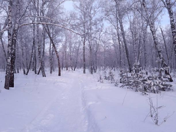 snow road in het winterbos. kerst scène. blauwe kerst achtergrond. - siberië stockfoto's en -beelden