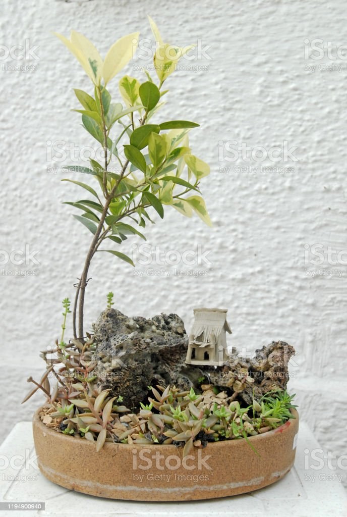 Bonsai Tree Stock Photo Download Image Now Istock