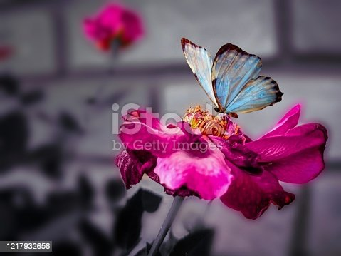 BUTTERFLY ON FLOWER BLUR BACKGROUND NATURE