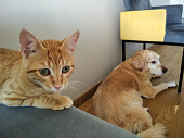 istock CUTE DOG AND THEIR BEST FRIEND CAT CHILLING TOGETHER 1269718788