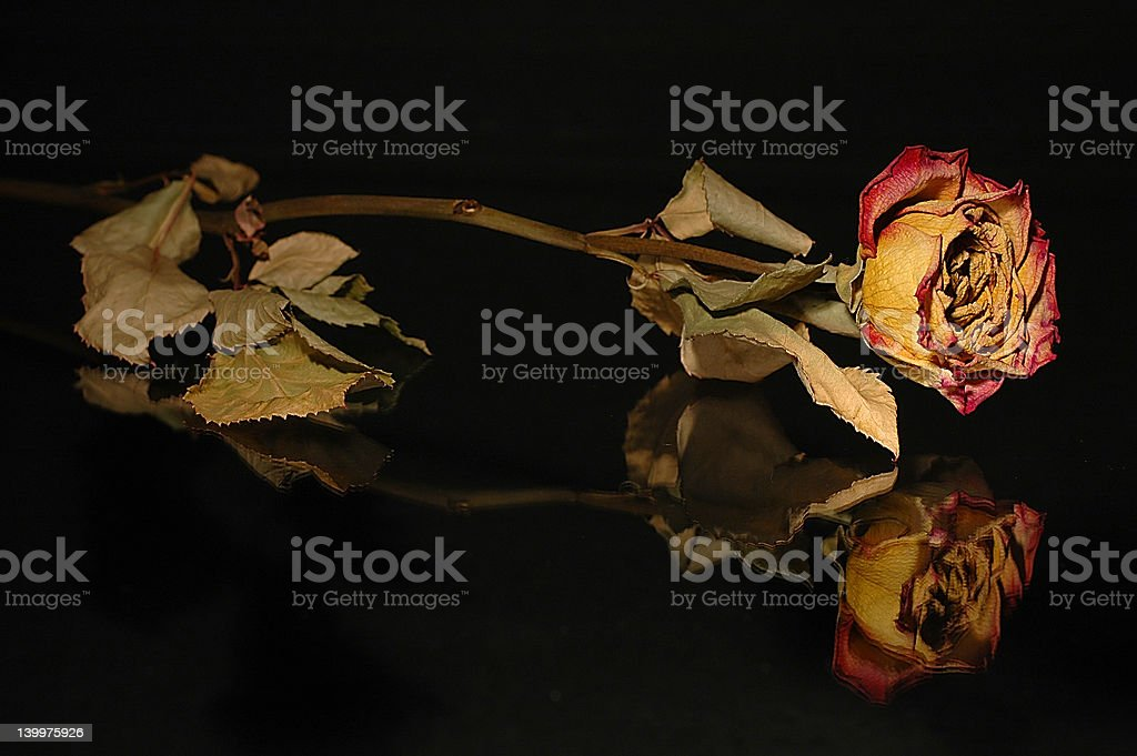 OLD LOVE royalty-free stock photo